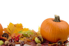 Pumpkin with autumn leaves for thanksgiving day on white background Royalty Free Stock Photos