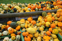 Pumpkin autumn market Stock Photography