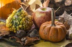 Pumpkin  autumn sceme Stock Image