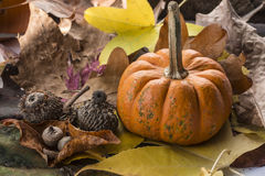 Pumpkin  autumn sceme Stock Photos