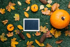Pumpkin and autumn season leaves with blackboard menu. On grass background Royalty Free Stock Image