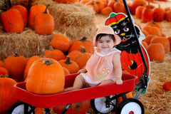 Pumpkin baby. Baby sitting in a cart in a pumpkin field Stock Image