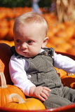Pumpkin Baby Stock Images
