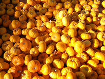 Pumpkin background. Background of harvested big ripe yellow pumpkins stock images
