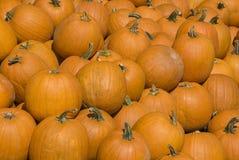 Pumpkin Background Stock Photos
