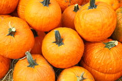 Pumpkin Background Stock Photo