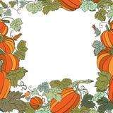Pumpkin Background. Pumpkin season in white Background Stock Photos