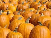 Pumpkin Background Royalty Free Stock Photos