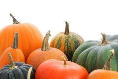 Pumpkin background. Pumpkins family. Group of fruits isolated on white background Stock Photography
