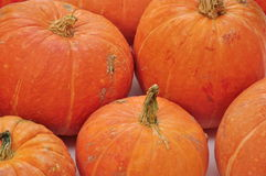 Pumpkin background Stock Images