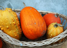 Pumpkin in basket Royalty Free Stock Image