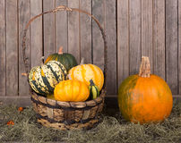 Pumpkin and Basket of gourds Stock Photography