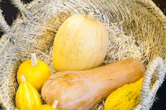 Pumpkin in a Basket Stock Photos