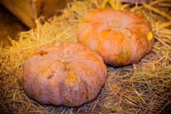 Pumpkin on basket. Slice pumpkin on bamboo basket Royalty Free Stock Photos