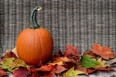 Pumpkin in bed of fall leaves Royalty Free Stock Image