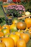 Pumpkin Bench stock photos