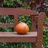 Pumpkin on the bench Stock Images
