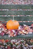 Pumpkin on Bench Royalty Free Stock Photo