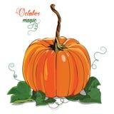 Pumpkin. A big ripe pumpkin green pumpkin leaves Royalty Free Stock Photography