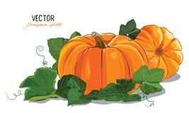 Pumpkin. A big ripe pumpkin green pumpkin leaves Royalty Free Stock Images