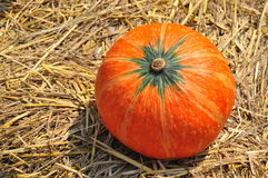 Pumpkin. Big Pumpkin on the straw royalty free stock photo
