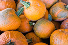 Pumpkin Bin Royalty Free Stock Photo