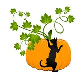 Pumpkin  and black cat Royalty Free Stock Photography