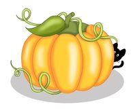 Pumpkin with black cat Royalty Free Stock Images