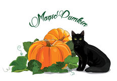 Pumpkin and black cat. Black green-eyed cat and a beautiful ripe pumpkin. Halloween design. Isolated on white, vector illustration, eps-10 Stock Images