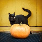 Pumpkin and black cat. On the porch stock photos