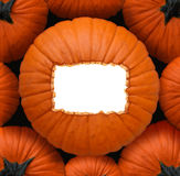 Pumpkin Blank Sign Royalty Free Stock Photography