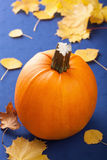 Pumpkin on blue background Stock Photo