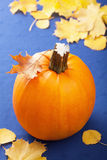 Pumpkin on blue background Royalty Free Stock Image
