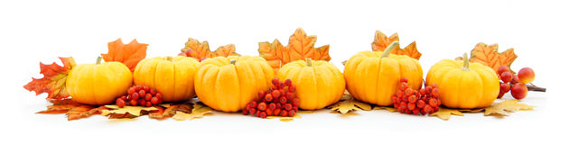 Free Pumpkin Border Stock Images - 21271654