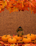 Pumpkin Border Stock Image