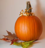 Pumpkin with bow and leaves Stock Photography