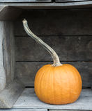 Pumpkin in a Box Royalty Free Stock Photo
