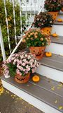 Pumpkin Buckets with Mum Flowers stock images