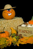 Pumpkin Buddy Stock Photos