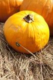 Pumpkin and Bug Thanksgiving Halloween Stock Photos