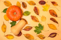 Pumpkin and butternut squash with colorful autumn leaves on light yellow background. Pleasant autumn colors. Beautiful fall leaves