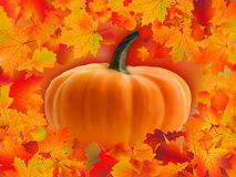 Pumpkin card with copyscace Stock Images