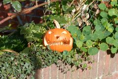 Pumpkin carved into scary face for halloween on wall Royalty Free Stock Photography