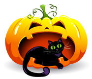 Pumpkin and cat. The black cat lies in a pumpkin. Vector illustration Royalty Free Stock Image