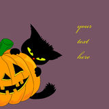 Pumpkin and cat Royalty Free Stock Images