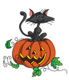 Pumpkin and Cat Royalty Free Stock Photography