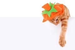 Pumpkin Cat Sign. Halloween or Thanksgiving pumpkin cat sign or banner Stock Photos