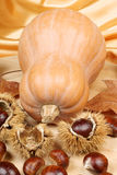 Pumpkin and chestnuts Royalty Free Stock Images