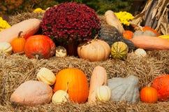 Pumpkin and chrysanthemums arrangement on hay for autumn sale Stock Photos