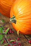 Pumpkin Close-up Royalty Free Stock Photography